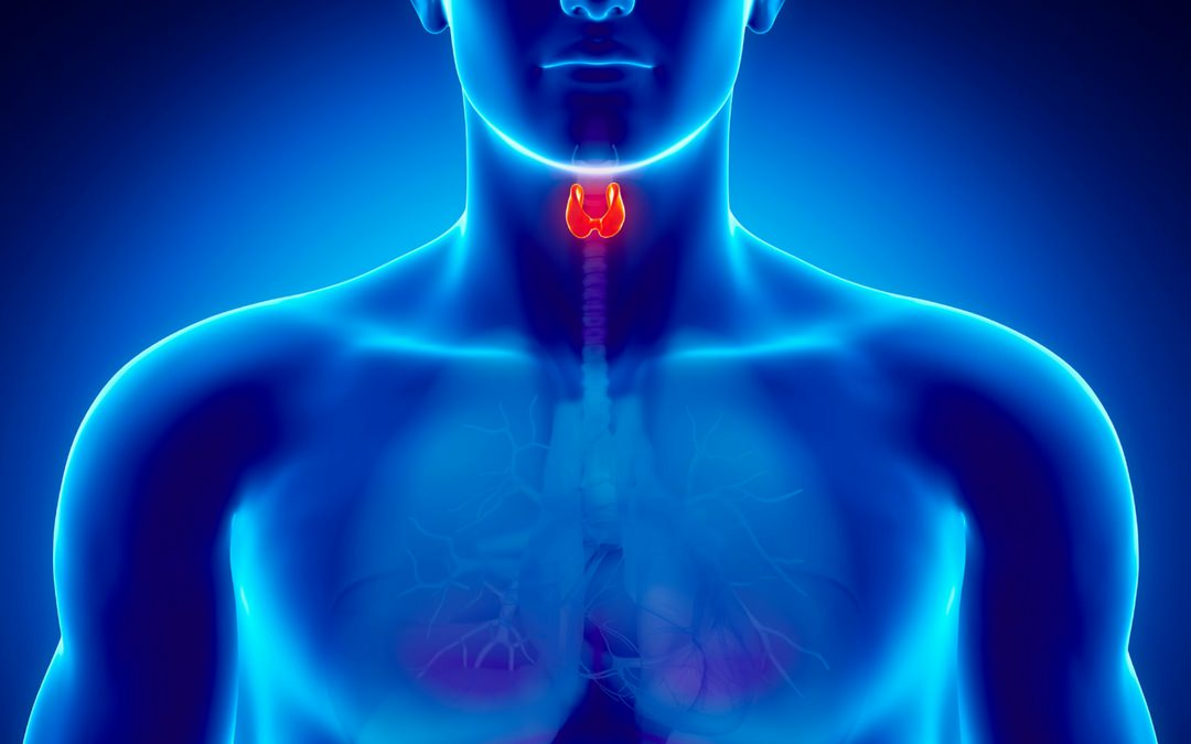 The Thyroid Uncovered
