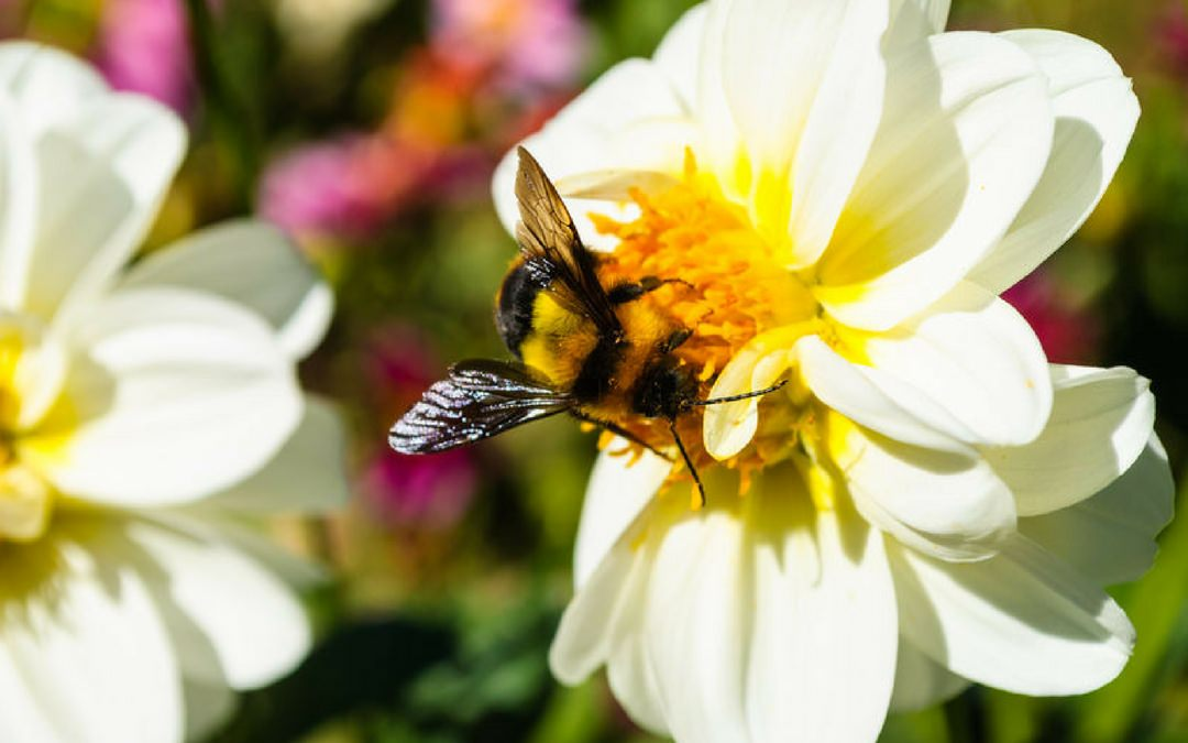 Using Bee Products to Beat Chronic Fatigue and Allergies