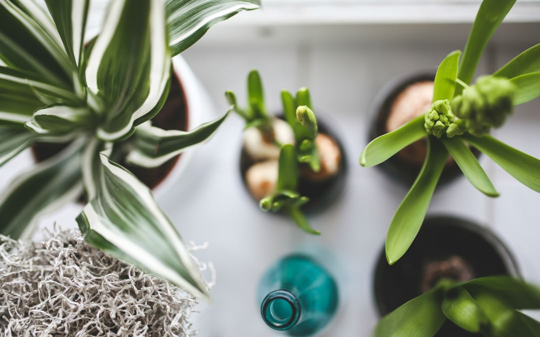What NASA Has to Say About Your Houseplants, Plus Finding Healthy Candles & Using Aromatherapy